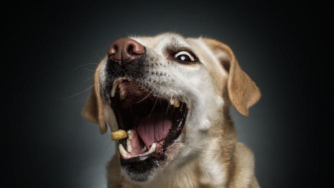Dlaczego pies nie powinien jeść tak jak my?