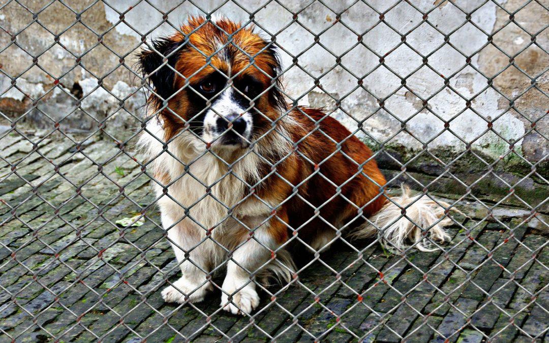 10 pytań, które musimy sobie zadać zanim adoptujemy psa ze schroniska.