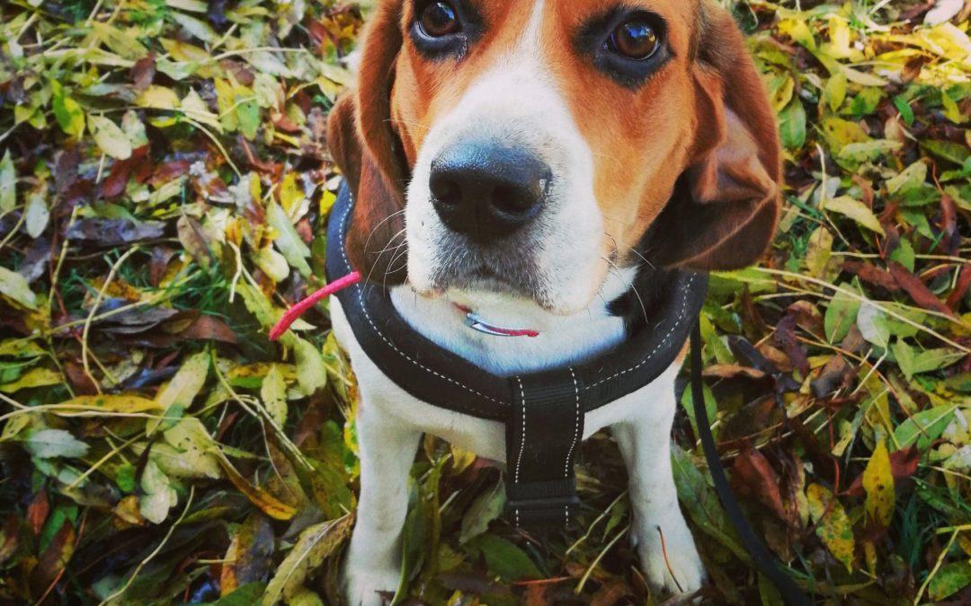 KORONAWIRUS – co zrobić z psem podczas kwarantanny?