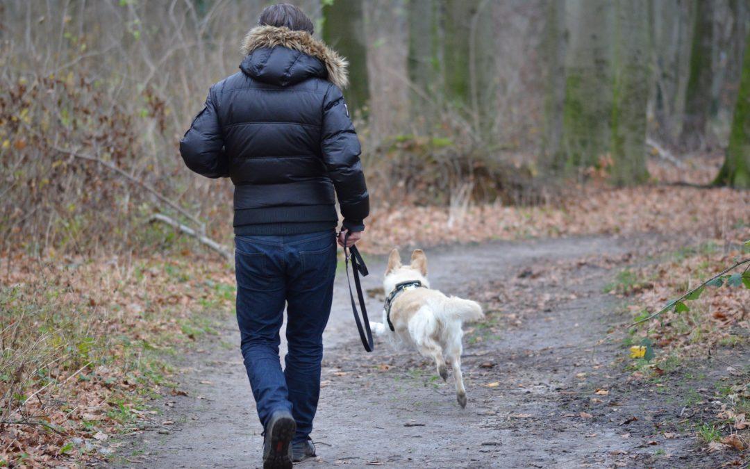 Pies ucieka – dlaczego?